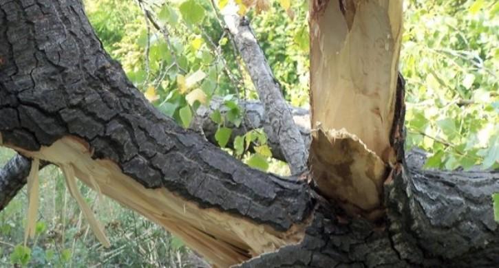 Дерево упало на семью с ребенком в Кыштыме