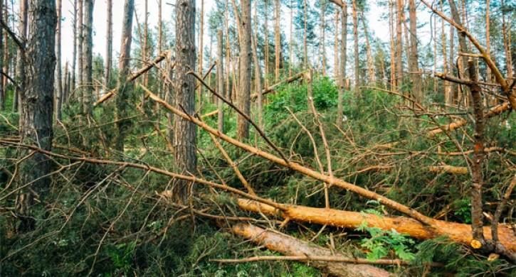 ВЧелябинской области тракторист раздавил 49 сосен