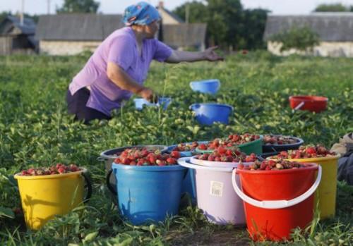 В Челябинске организовали бесплатный рынок для садоводов-пенсионеров