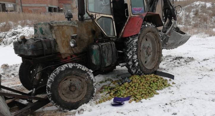 ВИжевске уничтожено неменее тонны польских груш