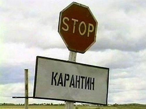 Челябинск иКопейск закрыты накарантин из-за бешенства