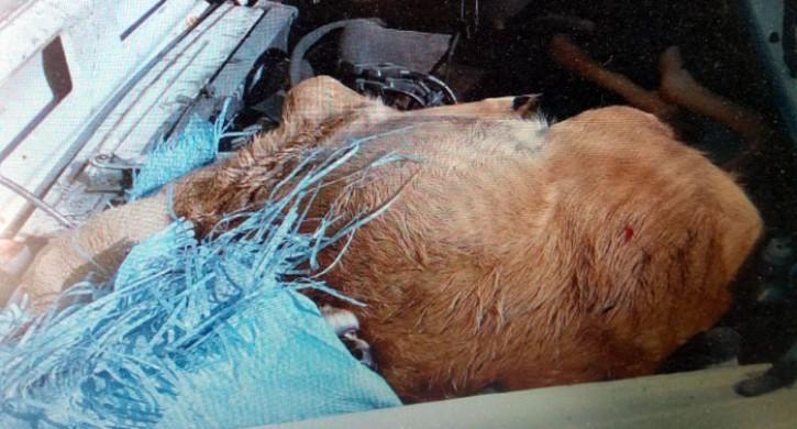 Браконьер получил 6 месяцев исправительных работ за убийство 2 косуль на Урале