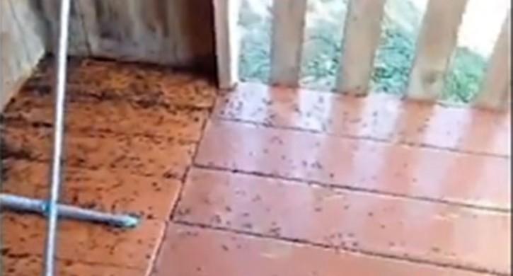 Жители южноуральской деревни пожаловались на нашествие мух
