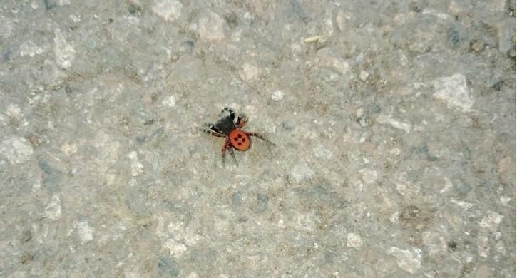 Ядовитый паук из Красной книги напугал жителей Магнитогорска