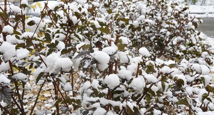 В Челябинскую область придут снегопады