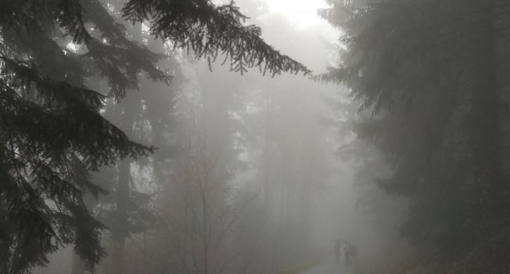 Утром 3 сентября в Челябинской области возможны туманы