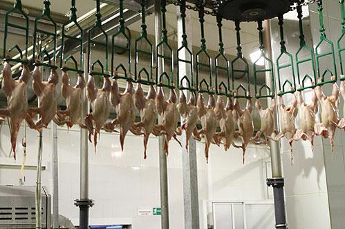 Украина: Производство мяса птицы в октябре сократился до 58,2 тыс. тонн