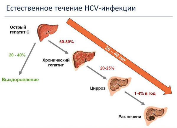 шлюху в анализе крови