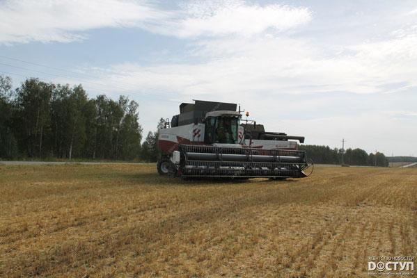 В РФ ожидают рекордный запоследние 25 лет урожай зерна