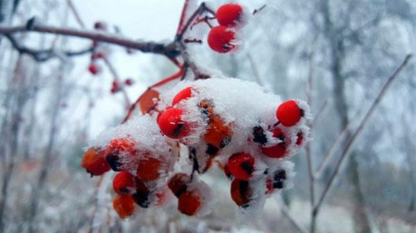 Синоптики прогнозируют погоду наначало следующей недели вгосударстве Украина - тепла не ожидайте