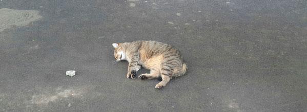 Кот упал с 2 этажа