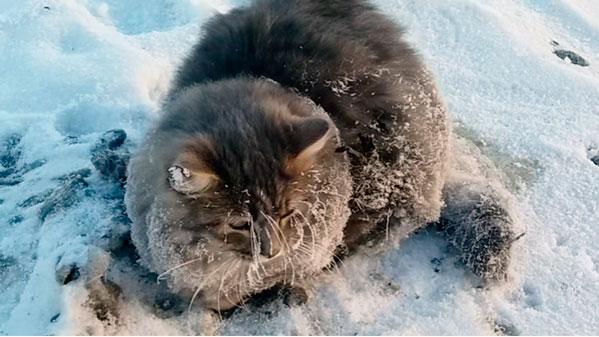 Под Челябинском спасли вмерзшего влед кота