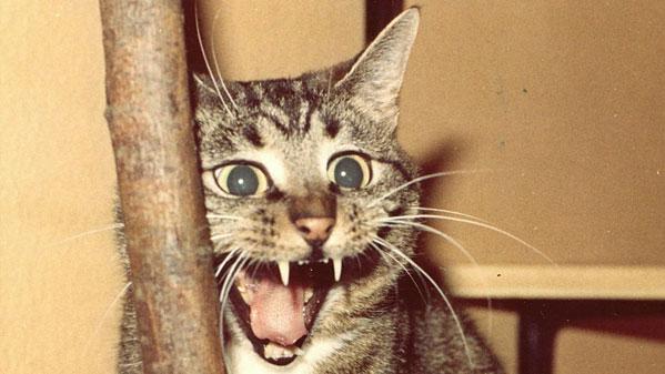 Наулице вЧелябинске отыскали бешеную кошку