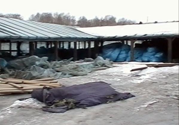 Изтеплицы под Челябинском врайотдел отвезли 70 мигрантов