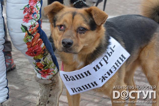 Уголовная ответственность за мошенничество жестокое обращение с животными