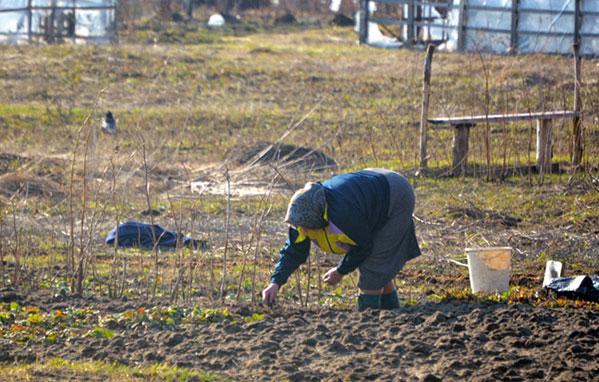 Отпуск для пенсионера работающего украина