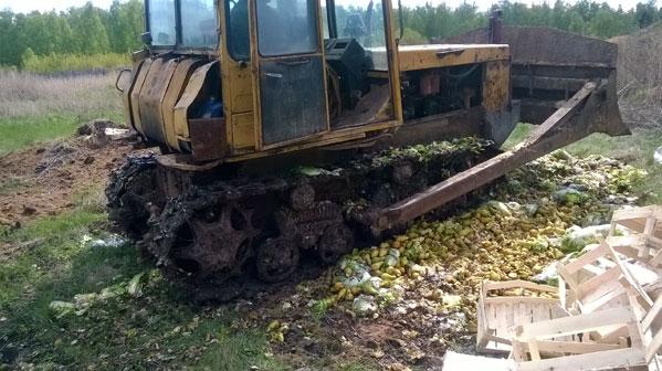 Россельхознадзор Челябинской области уничтожил 1777 килограммов груш ипекинской капусты изПольши