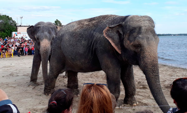 Вчелябинском озере Смолино искупали слонов