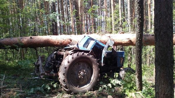 ВЧелябинской области дровосек умер  под рухнувшим деревом