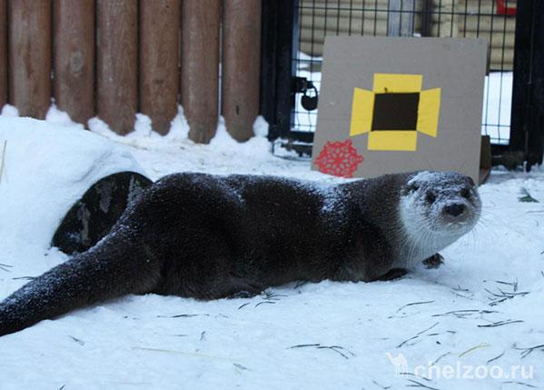 Выдра Лютер изчелябинского зоопарка стала ассистентом Деда Мороза