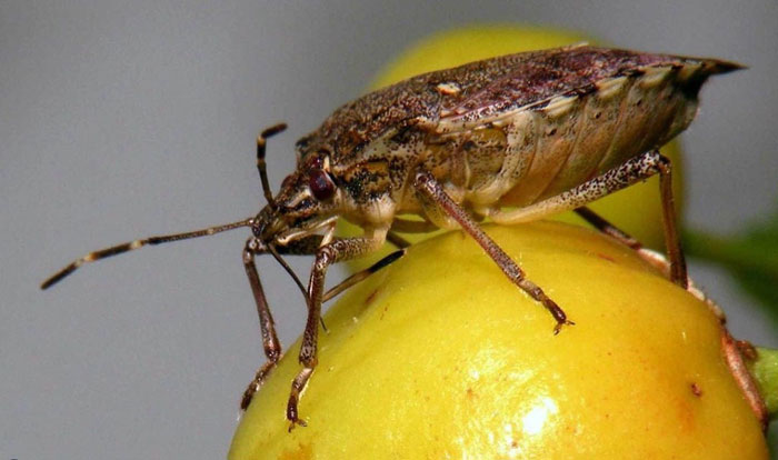 Россельхознадзор вводит запрет наввоз мандаринов изАбхазии