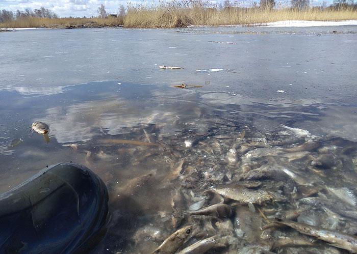 Тонны мертвой рыбы отыскали активисты наозере вКунашакском районе